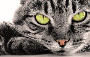 Самые интересные факты про кошек