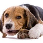 Самые удивительные и интересные факты о собаках