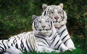 Самые интересные факты о жизни животных