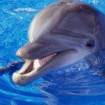 Самые интересные факты о дельфинах