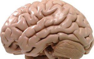 Ученые сравнили мозг женщины и мужчины