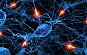 Доказано: нервные клетки восстанавливаются