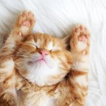 Проблемы со сном уменьшают продолжительность жизни