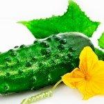 Калорийность свежих огурцов на 100 грамм, польза, вред продукта
