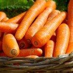 Польза, вред, калорийность свежей и вареной моркови на 100 грамм