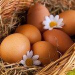 Польза, вред, калорийность куриного яйца на 100 грамм