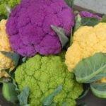Польза, вред, калорийность цветной капусты на 100 грамм