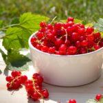 Польза, вред, калорийность красной смородины на 100 грамм