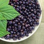 Польза, вред, калорийность черной смородины на 100 грамм