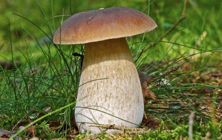 белые грибы калорийность на 100 грамм