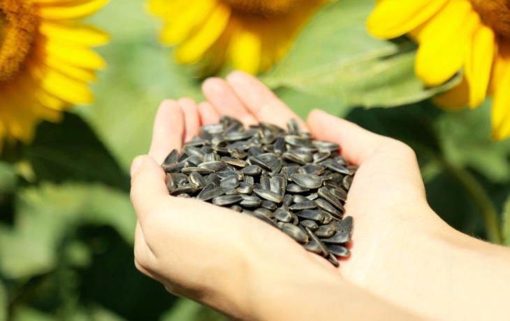 калорийность жареных семечек подсолнечника