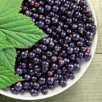 Польза и вред черной смородины для организма
