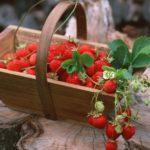 Противопоказания, польза и вред садовой, лесной земляники