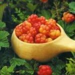 Польза и вред морошки для здоровья человека