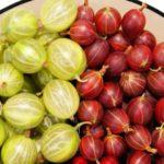 Ягоды крыжовника: польза и вред замороженных, зеленых, в компоте