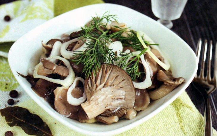 грибы вешенки польза