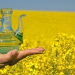 Противопоказания, польза и вред рыжикового масла, как принимать
