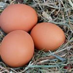 Польза и вред куриного яйца для здоровья