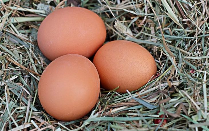 яйца куриные польза и вред для здоровья