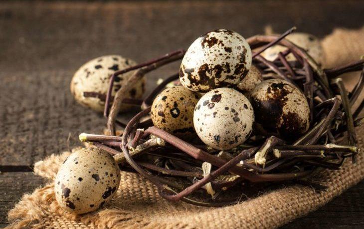сырые перепелиные яйца польза и вред