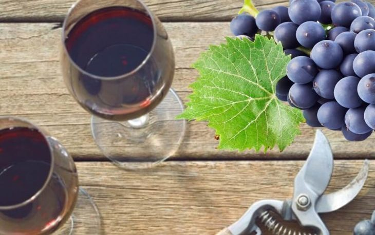 вино изабелла польза вред