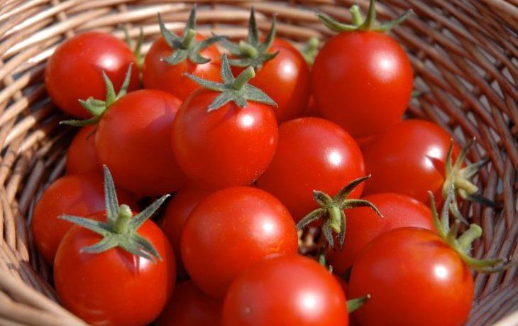 польза и вред томатов свежих