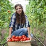 Польза и вред томатов для здоровья организма человека