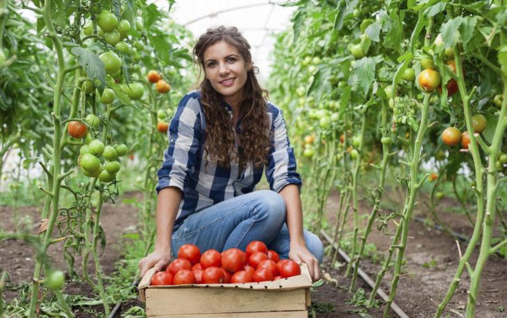 томаты польза и вред для здоровья женщины
