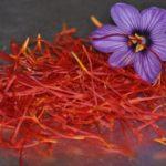Польза и вред шафрана для здоровья организма человека