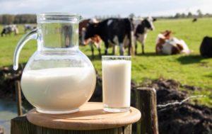 Почему горчит молоко у коровы зимой: причины и что делать