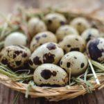Насколько полезны перепелиные яйца? Подборка фактов