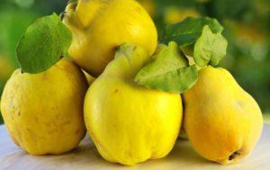 Фрукт айва: полезные свойства и как едят