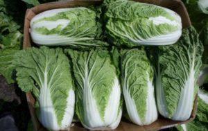 Можно ли есть пекинскую капусту при коронавирусе