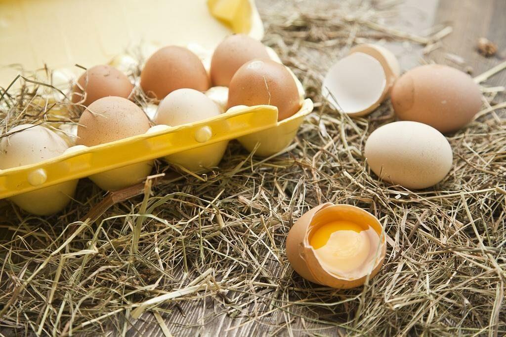Когда полезнее есть яйца: утром или на ночь