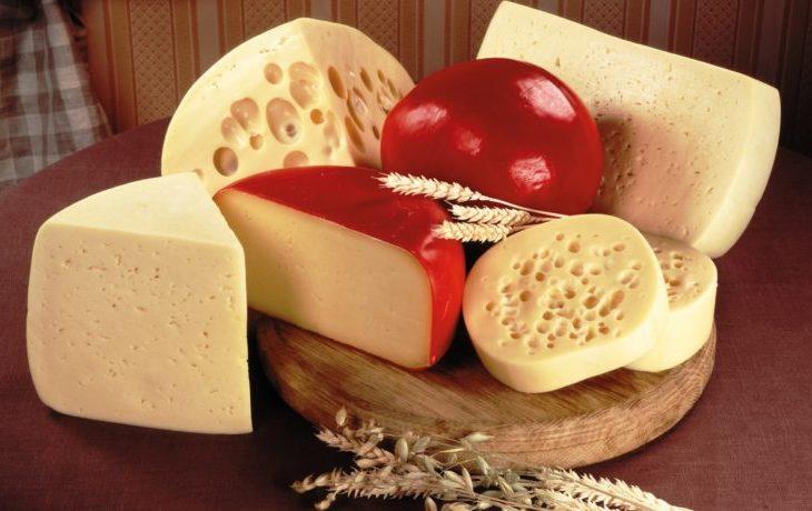 полезно ли есть сыр каждый день