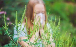 Что можно и нельзя есть при аллергии на амброзию