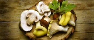 есть ли полезные вещества в грибах