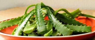полезно ли есть листья алоэ