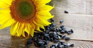 Полезно ли есть жареные семечки подсолнуха
