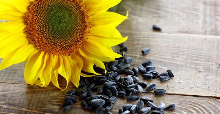 полезно ли есть семечки подсолнуха жареные