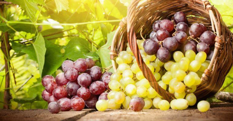 полезно есть виноград