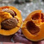 10 полезных свойств антильского абрикоса