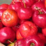 10 полезных свойств барбадосской вишни