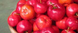 чем полезна барбадосская вишня