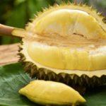10 полезных свойств дуриана