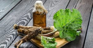 10 полезных свойств корня лопуха