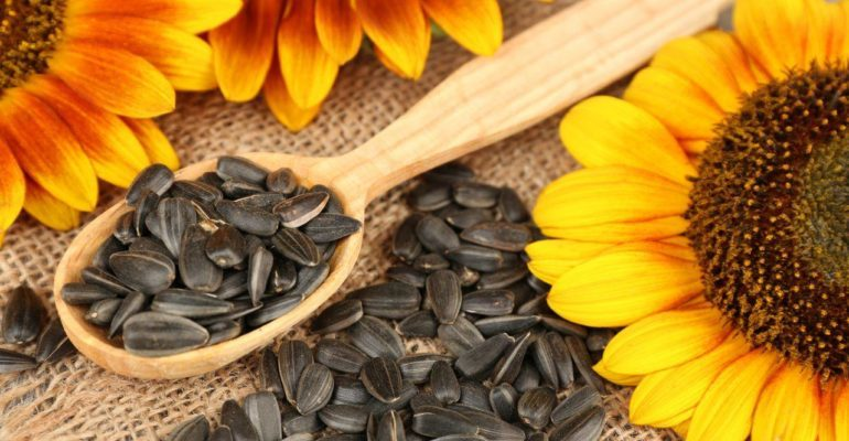 организм требует подсолнечных семечек причины