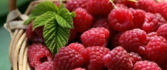 как ягода малина влияет на давление